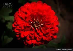 مقاله درباره پرورش گل